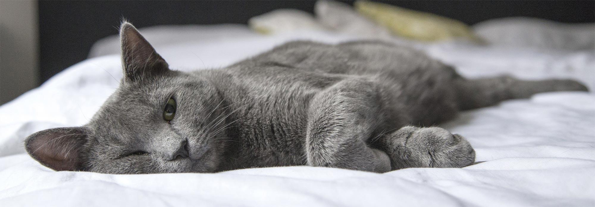 Kategoriebild Bettwaren